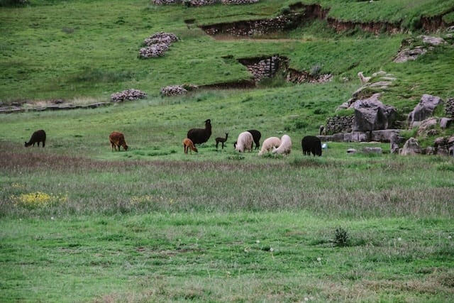 Cusco-79